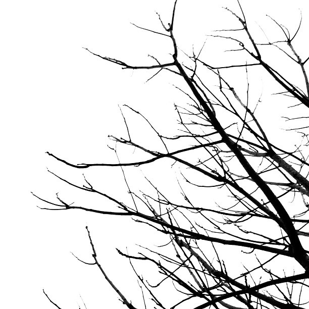tree_black_and_white.png